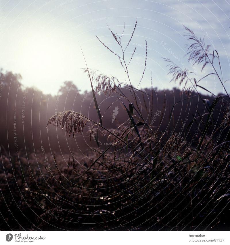 Früh Morgens Schilfrohr Stimmung Gegenlicht Mecklenburg-Vorpommern Röhricht Wassergraben Herbst frühstart Seil