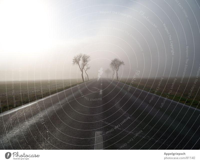 Nebel Baum Horizont Feld Wolken Fernstraße Straßenverkehr Landstraße Fahrbahn Aussicht Schnellstraße Nebelschleier Verkehrswege Winter Himmel Perspektive