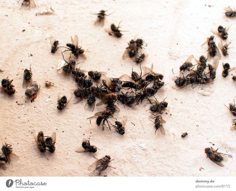 Die Sterben wie die Fliegen... Tod fliegen mehrere Tiergruppe viele