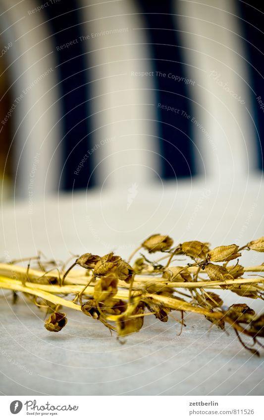 Akelei Blume Blüte Pflanze getrocknet vertrocknet Heu Blumenstrauß Halm Stengel Herbst Tod trocken Blatt Tisch Markise Stoff Schwache Tiefenschärfe Unschärfe