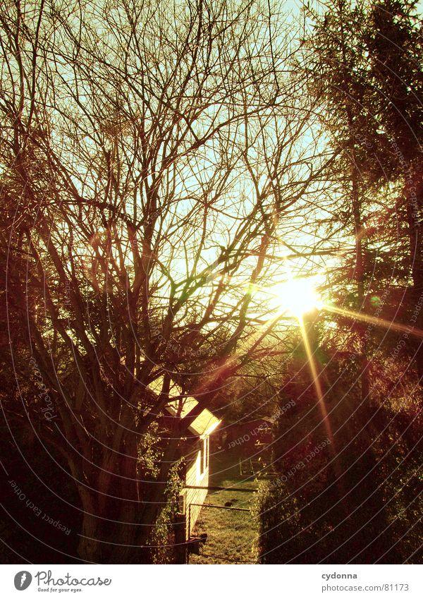 Kleine heile Welt Beleuchtung Sonnenuntergang Licht Baum Garten Haus blenden schön Stimmung Eindruck Zaun Aufgabe Geborgenheit Einsamkeit grün abgelegen Gras