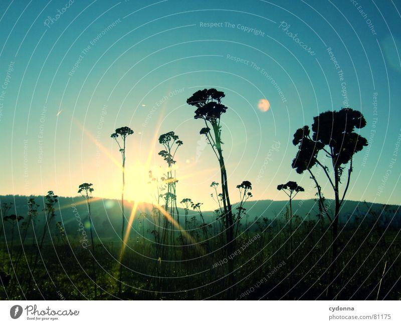 Sonnenuntergang Charakter dunkel Reifezeit Winter schön Blume Stimmung Eindruck Reflexion & Spiegelung Lichtbrechung blenden Stengel Blüte schwarz Silhouette