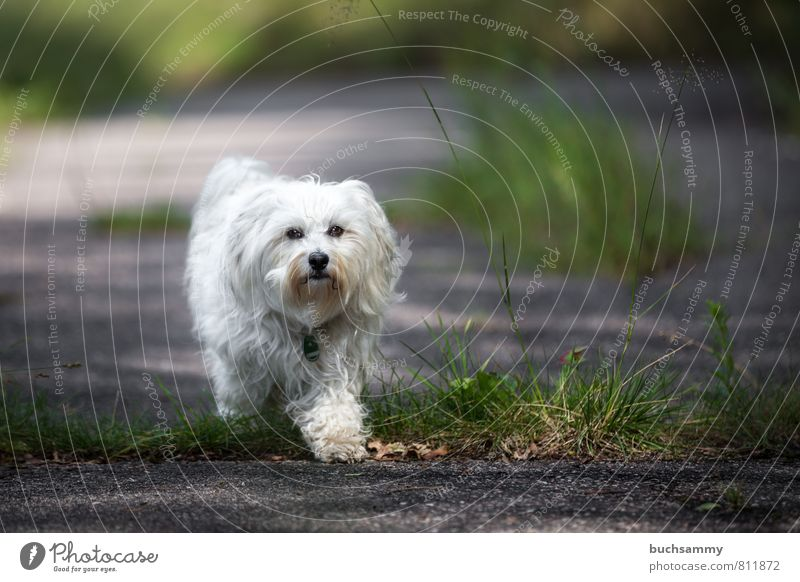 Schritt für Schritt Hund grün weiß Freude Tier schwarz Straße Gras Wege & Pfade Spielen klein Stein gehen Aktion Lebewesen Fell