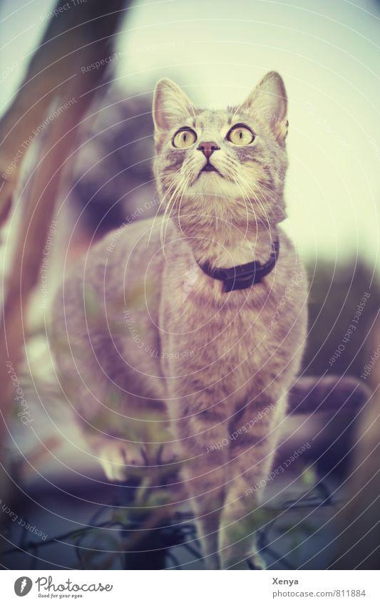 Unbekannte Schönheit Katze Tier braun Neugier Klettern Konzentration Haustier Katzenauge