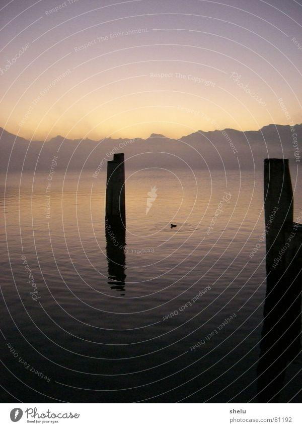 Morgenstund hat Gold im Mund Wasser Sonne Winter ruhig Berge u. Gebirge See Stimmung Nebel Steg Seeufer Schleier Luzern Nebelschleier
