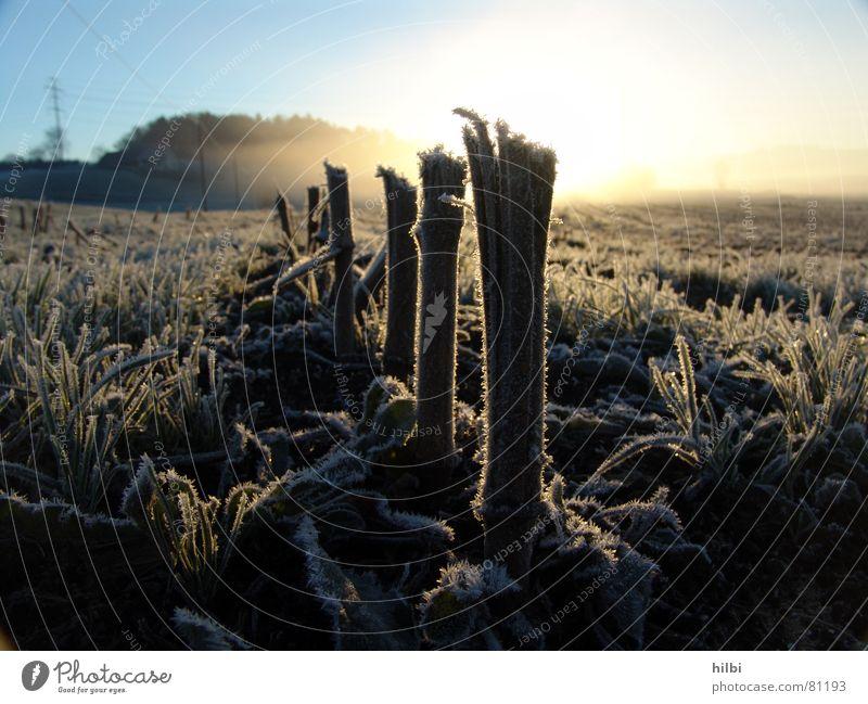 geerntet Raureif Feld Halm Sonnenaufgang Herbst Winter Ernte Morgen Schnee