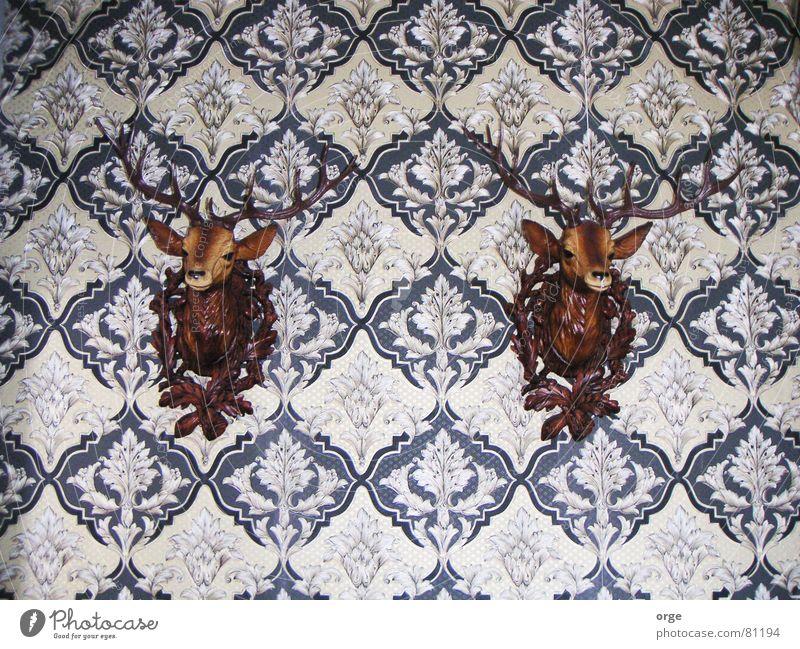Ich beobachte dich! Dekoration & Verzierung Hirsche Horn Tapete 2 braun Tier Publikum Muster Wand Innenaufnahme Kontrolle überwachen beachten bewachen Blick