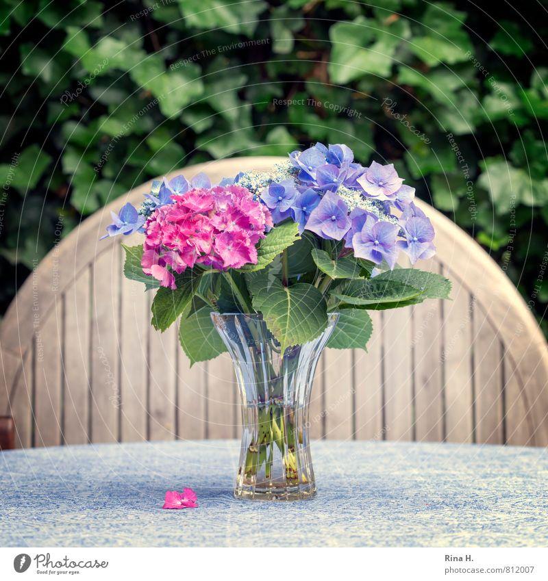 Für inkje Sommer Blume Efeu Blühend verblüht Tischwäsche Holztisch Glasvase Stillleben Hortensie Hortensienblüte Quadrat Farbfoto Außenaufnahme Menschenleer