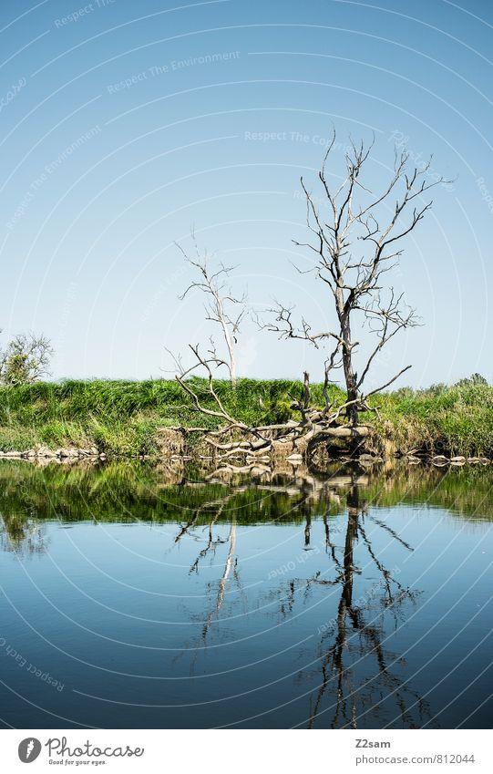 bäumchen Umwelt Natur Landschaft Wolkenloser Himmel Sommer Schönes Wetter Baum Wiese Flussufer ästhetisch einfach elegant nachhaltig natürlich Sauberkeit blau