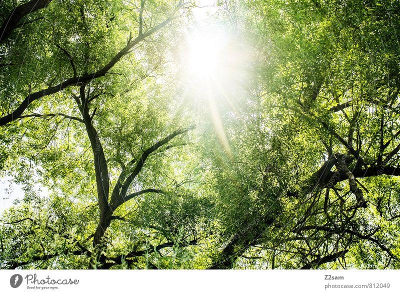 bayerischer Urwald Umwelt Natur Landschaft Sonne Sonnenlicht Sommer Baum Sträucher Wald frisch nachhaltig natürlich Wärme gelb grün Warmherzigkeit ruhig Energie