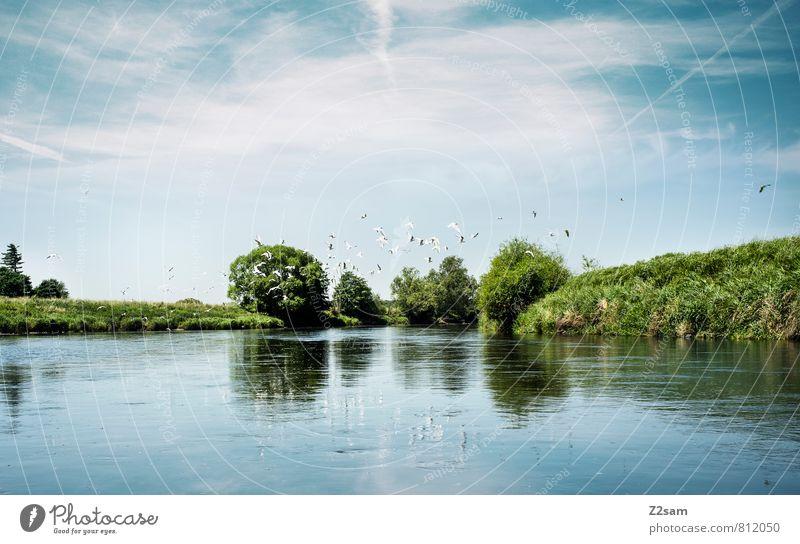 Ein Tag am Fluß Himmel Natur Ferien & Urlaub & Reisen blau grün Baum Einsamkeit Erholung ruhig Landschaft Wolken Umwelt Wiese Vogel träumen Idylle