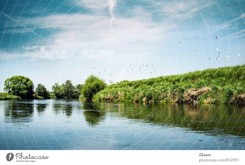 Blau/Grün/Blau Ferien & Urlaub & Reisen Ausflug Sommer Sommerurlaub Umwelt Natur Landschaft Himmel Wolken Schönes Wetter Baum Sträucher Flussufer Vogel Schwarm