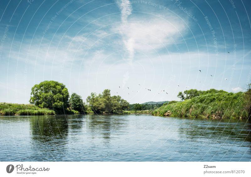 der schöne Regen! Himmel Natur blau grün Sommer Baum Erholung Einsamkeit ruhig Landschaft Wolken Ferne Umwelt natürlich fliegen Vogel