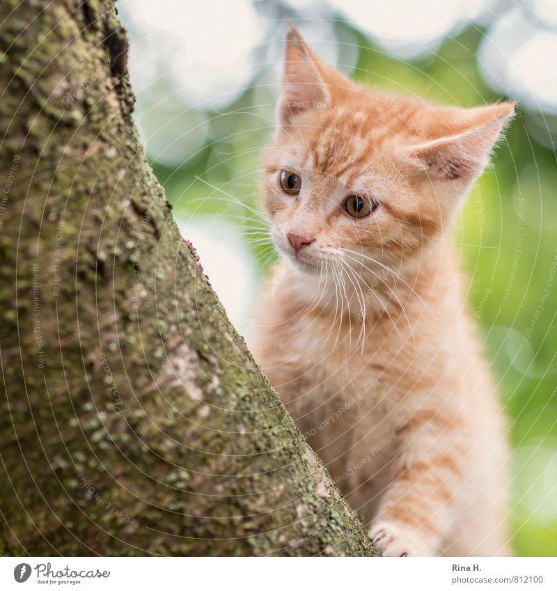 Tai Baum Haustier Katze 1 Tier Tierjunges sitzen Neugier niedlich Unschärfe Quadrat Klettern Baumstamm Farbfoto Außenaufnahme Menschenleer Lichterscheinung