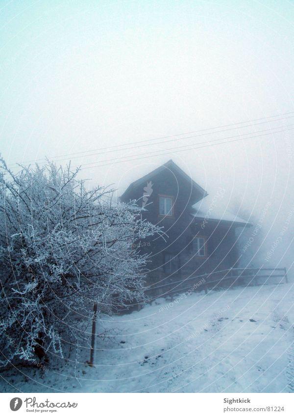 Der weiße Weg 2 Nebel Wolken Schweiz Haus Sträucher Zaun Fenster Dach kalt Winter Hecke Eis Landhaus Schleier Nebelschleier Schnee snow helvetia Gebäude Wohnung