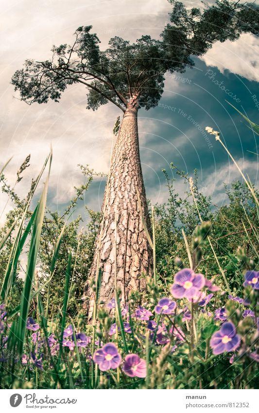 Einzelstück Holzwirtschaft Landwirtschaft Forstwirtschaft Umwelt Natur Frühling Sommer Schönes Wetter Baum Blume Gras Sträucher Waldrand Baumstamm Baumrinde