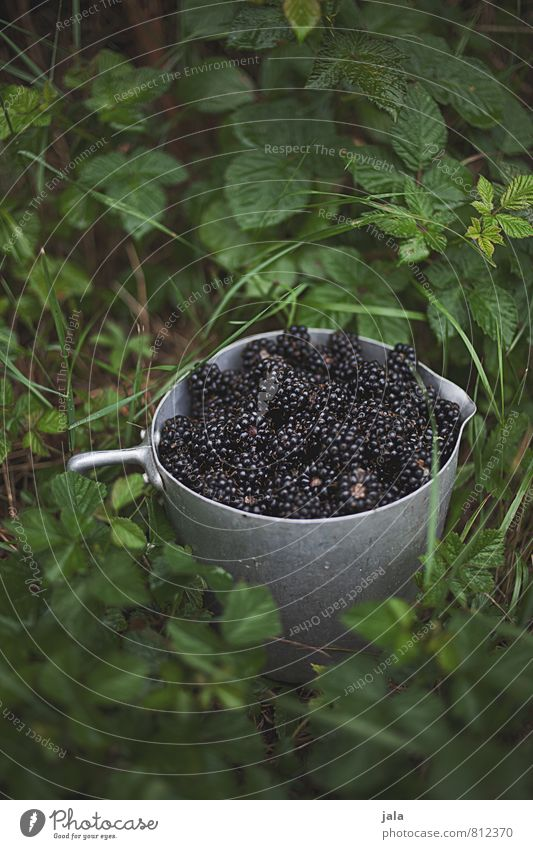 brombeeren Lebensmittel Frucht Brombeeren Ernährung Schalen & Schüsseln Topf Gesunde Ernährung Natur Pflanze Sträucher Grünpflanze Nutzpflanze Garten frisch