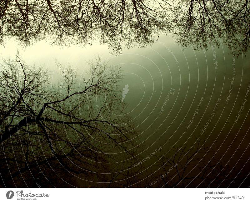 FREEZING TIME Romantik Wald Baum Winter Herbst kalt grau Kitsch Blatt grün Wäldchen Baumstamm Nebel dunkel Wildnis hart Gefühle Schwärmerei Licht Umwelt frisch