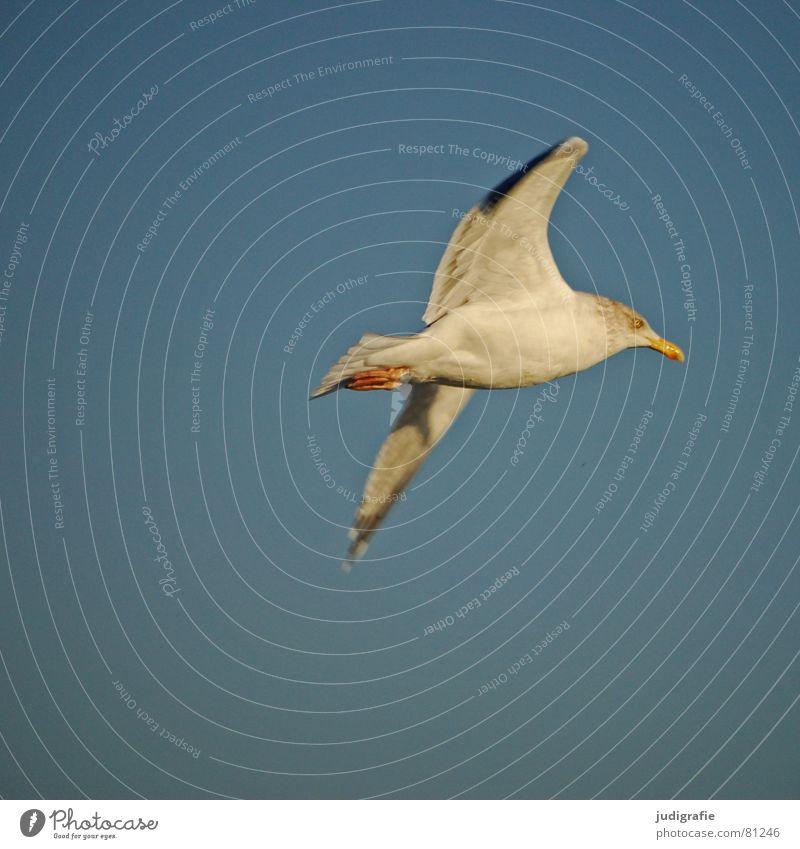 Flug ins Licht Himmel Natur Ferien & Urlaub & Reisen Meer Tier Auge Erholung Umwelt Leben Freiheit Bewegung See Fuß Vogel fliegen Flügel