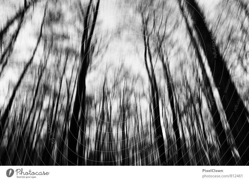 the forest weiß Baum Einsamkeit schwarz dunkel Wald Traurigkeit Angst Wind wandern verrückt bedrohlich Trauer Todesangst gruselig Unwetter