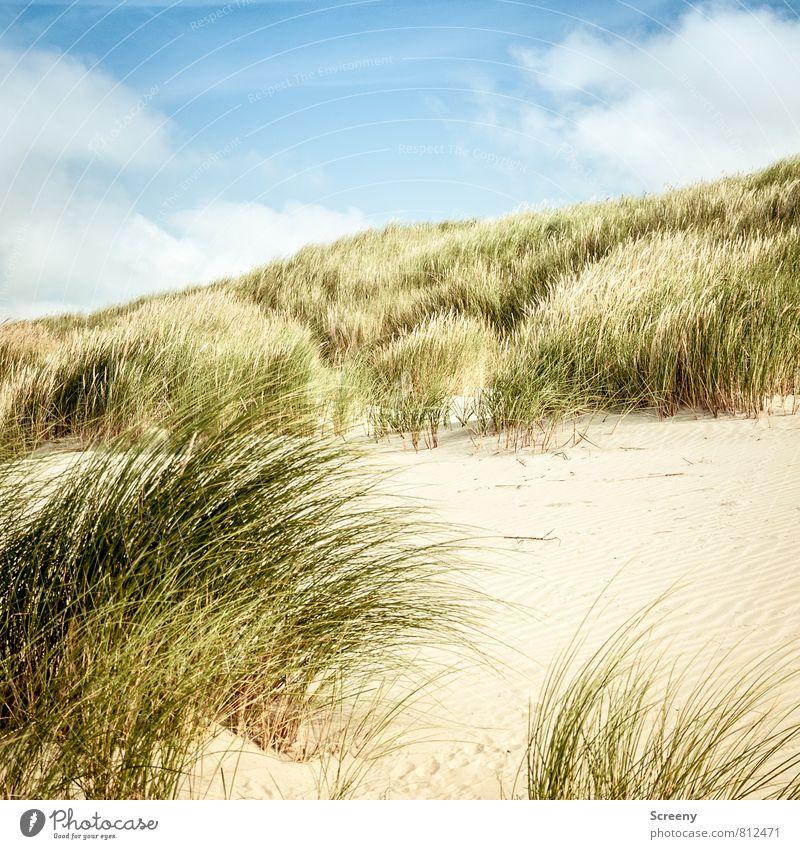 Sehnsucht Himmel Natur Ferien & Urlaub & Reisen blau Pflanze grün Sommer Meer Erholung ruhig Landschaft Wolken Strand gelb Gras Küste