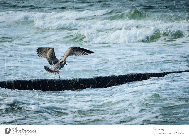 Feuchte Socken Natur Ferien & Urlaub & Reisen Wasser Sommer Meer Landschaft Tier Küste Freiheit fliegen Vogel Wellen stehen Insel Seeufer Möwe