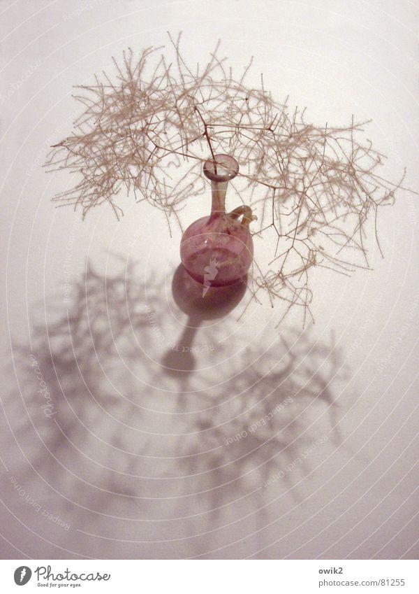 zerbrechlich Glas Stil Design Häusliches Leben Innenarchitektur Dekoration & Verzierung Pflanze dünn klein trocken verrückt Schwäche Vase winzig Schattenspiel