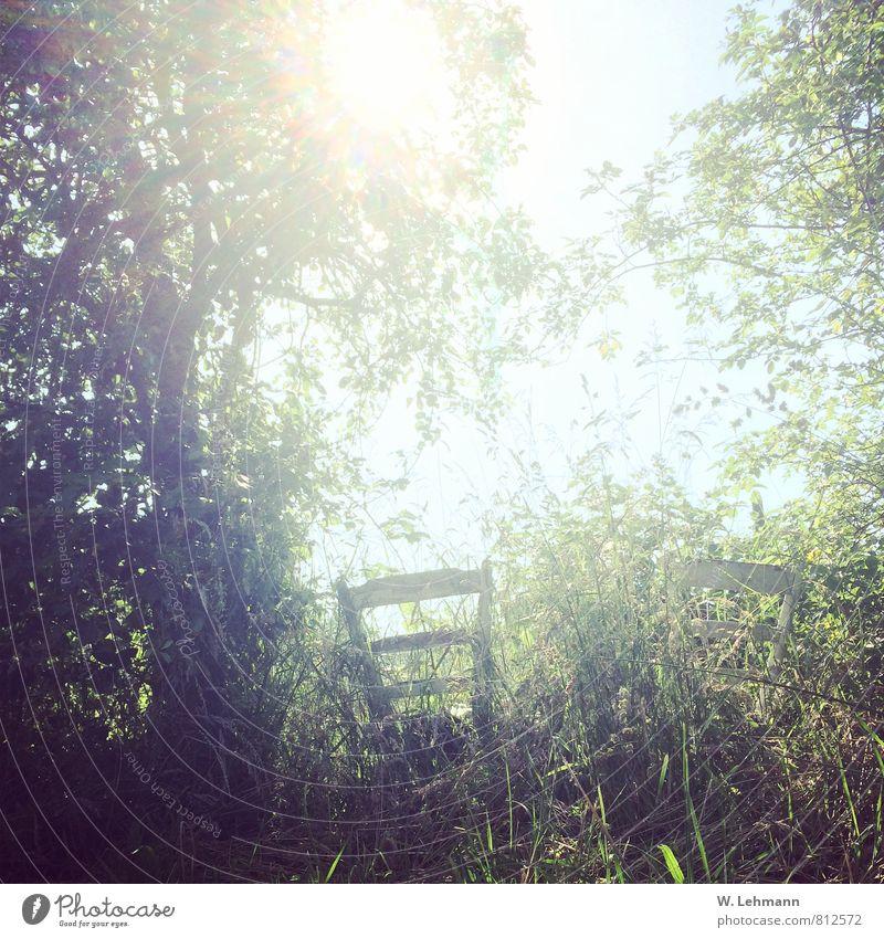 Romantik? Natur Landschaft Pflanze Tier Wolkenloser Himmel Sonne Baum Wiese Garten Feld Stuhl außergewöhnlich Sonnentag Stühle weiß Hohes Gras Farbfoto