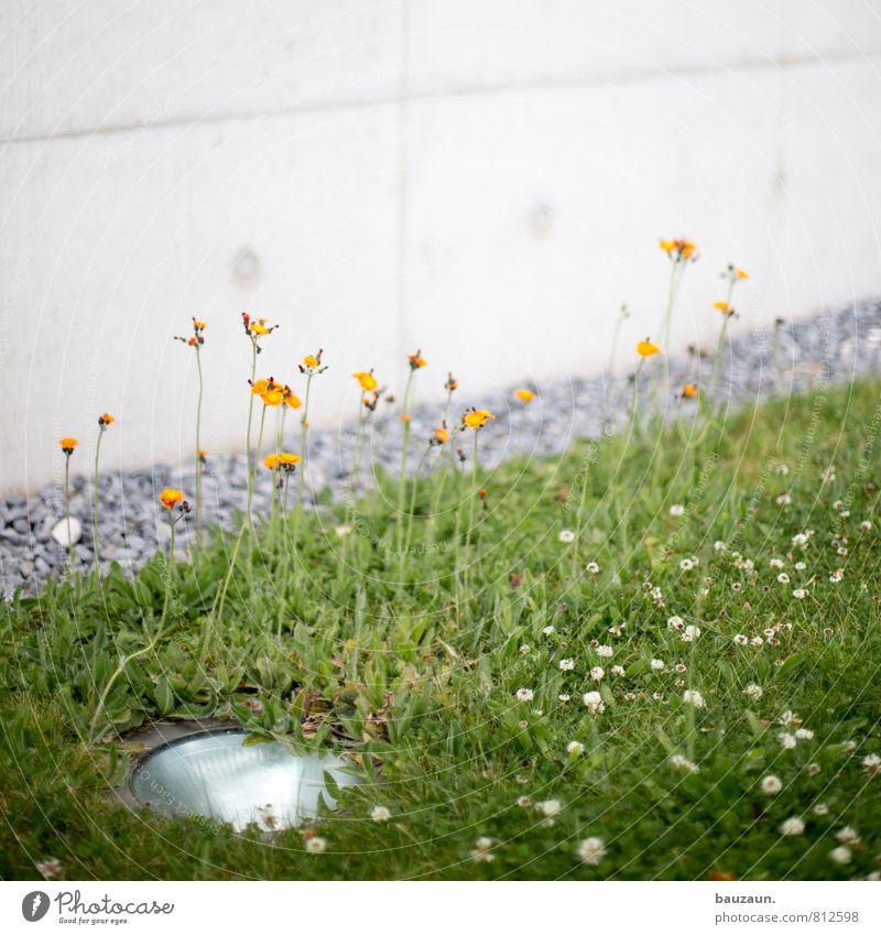 350 | für die blumen. Ausflug Häusliches Leben Haus Garten Lampe Gartenarbeit Umwelt Natur Pflanze Blume Gras Blüte Park Wiese Traumhaus Mauer Wand Fassade