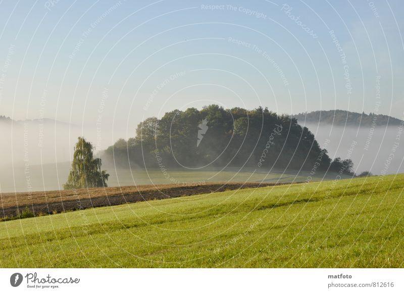 Spätsommer Natur blau schön grün Sommer Baum ruhig Landschaft Wald Wiese Herbst Stimmung Feld Nebel Sträucher Schönes Wetter