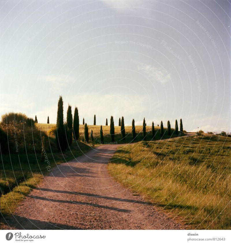 toscana² Himmel Natur Ferien & Urlaub & Reisen Pflanze Sommer Baum Landschaft Wolken Umwelt Wärme Straße Wege & Pfade Tourismus wandern Schönes Wetter Hügel