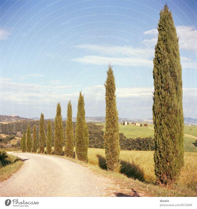 way to wine Himmel Natur Ferien & Urlaub & Reisen Pflanze Sommer Baum Landschaft Wolken Umwelt Wärme Straße Wege & Pfade Tourismus wandern Schönes Wetter Hügel