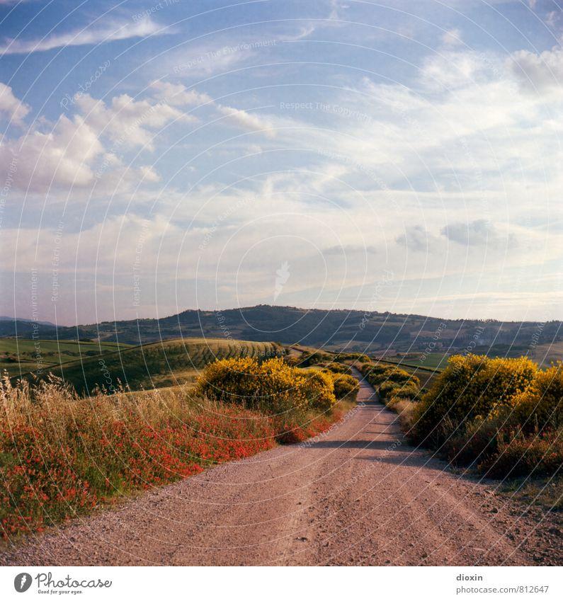 Road to San Quirico Ferien & Urlaub & Reisen Tourismus Ausflug Ferne Freiheit Sommer Sommerurlaub Umwelt Natur Landschaft Pflanze Blume Gras Sträucher Feld