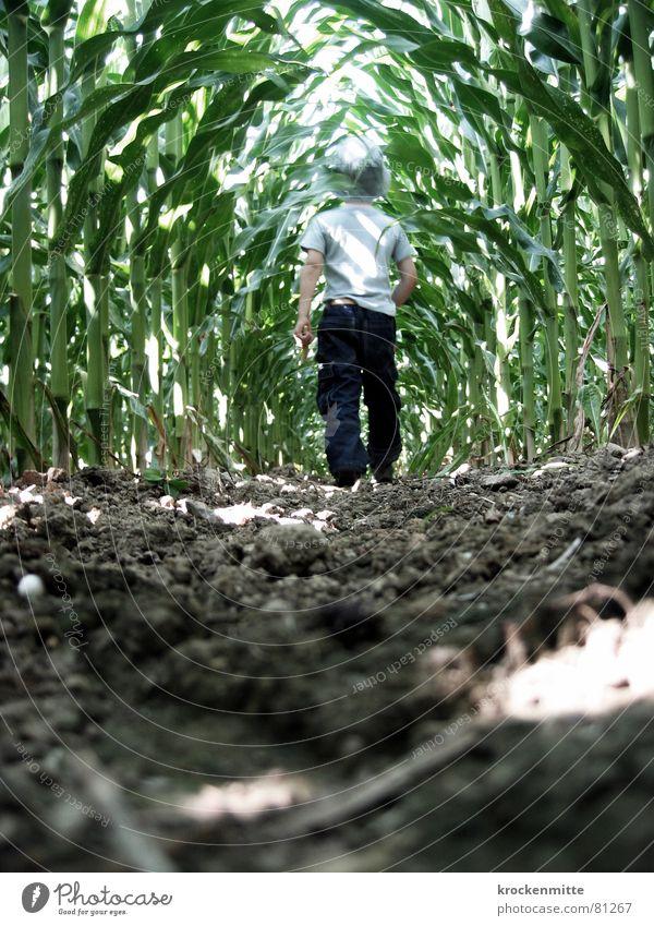 Kind des Korns Maisfeld Mut Kornfeld Junge Froschperspektive unheimlich ungewiss grün Durchgang Mutprobe Kleinkind gruselig gefährlich durchschreiten