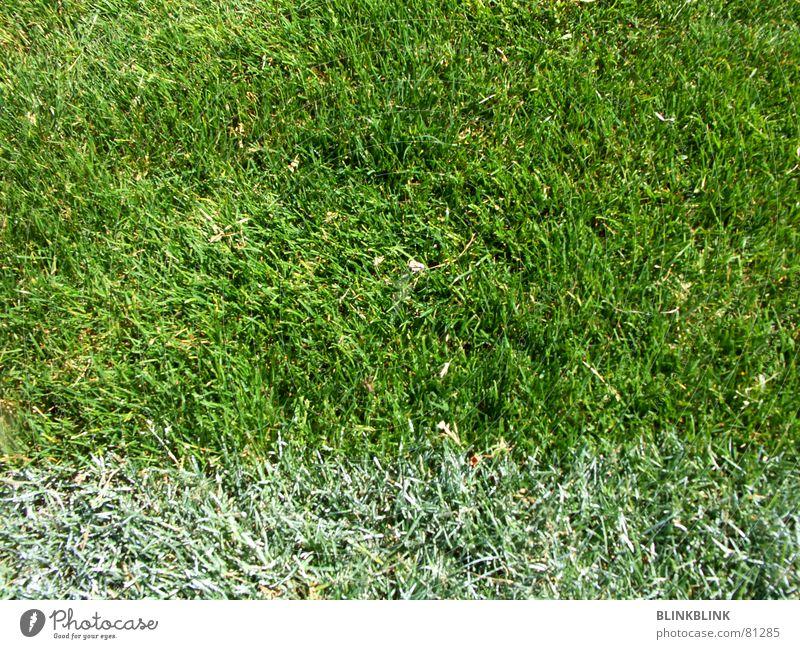 fussi grün weiß Wiese Gras Sommer Fußballplatz Spielen Fan Freude Sport Linie rasenweißer Ball