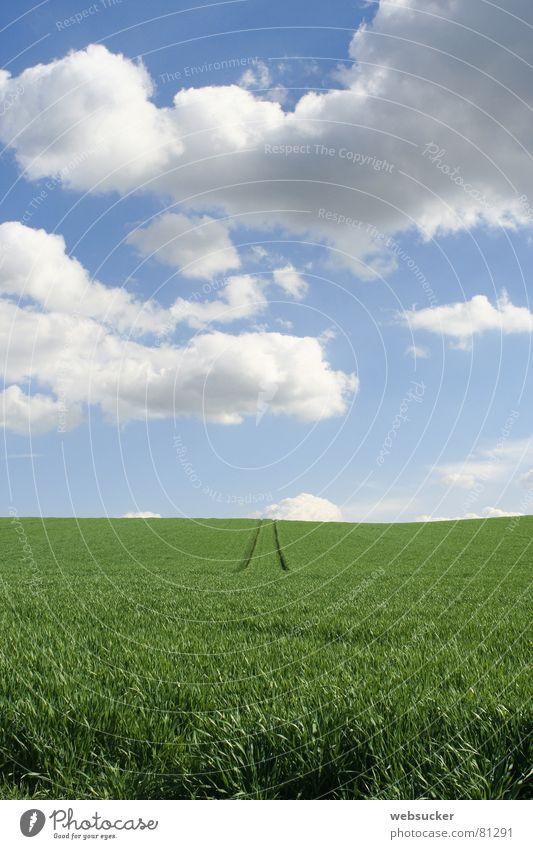 saftiges Grün Thüringen Sommer Wiese Wolken Gras grün Himmel juicy green traces Wege & Pfade Spuren clouds path meadow grassland sky