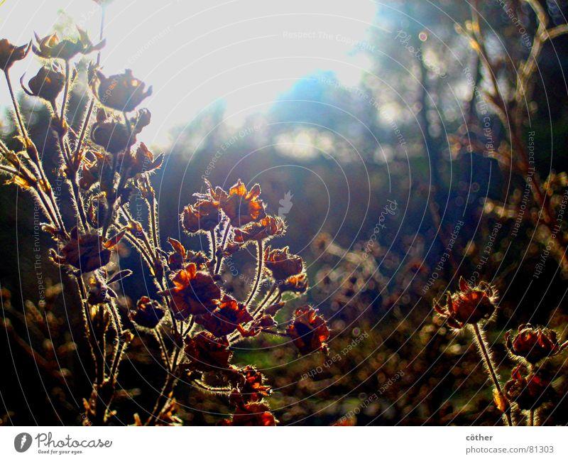 Wintersonne Sonne Wiese Blüte Garten Park Januar Herbstlandschaft