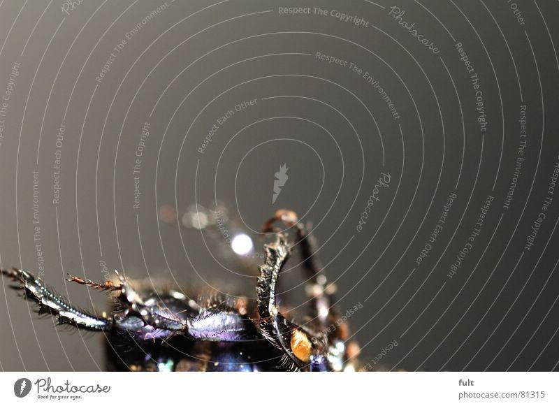 käfer Tier Insekt Borsten Tod Käfer Verschiedenheit Makroaufnahme Nahaufnahme liegen Beine aus dem leben geschieden kadaver beetle tierleiche Totes Tier