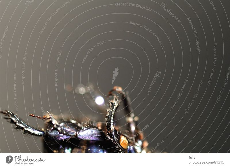 käfer Tier Tod Beine liegen Insekt Verschiedenheit Käfer Borsten