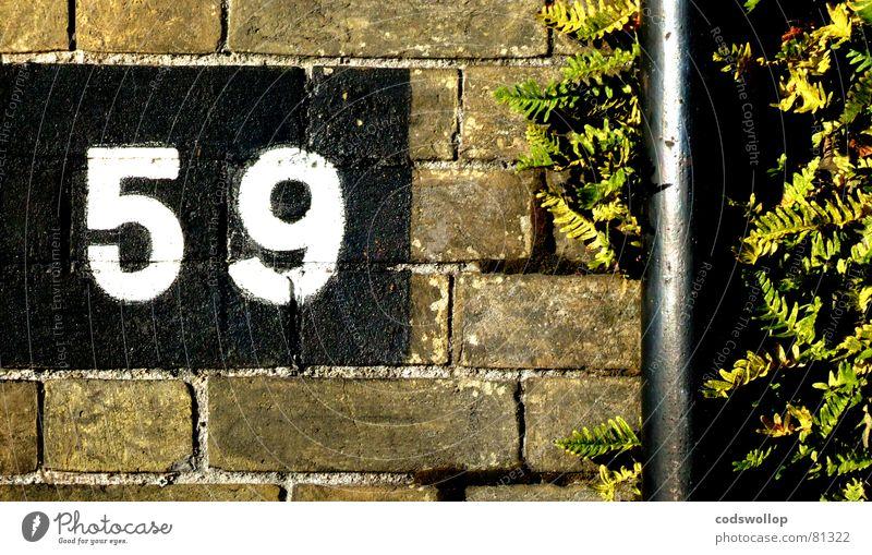 neunundfunfzig Backstein Norfolk Wand Ferne England Great Yarmouth Ziffern & Zahlen Detailaufnahme Kommunizieren ablaufrohr drain pipe nine Echte Farne bricks