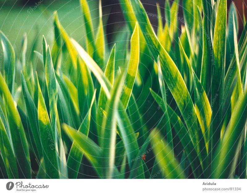 natur_04 Natur grün Sommer ruhig Garten träumen Park Beleuchtung Strahlung Sonnenbad sanft Lilien Lichtschein Lichtstrahl