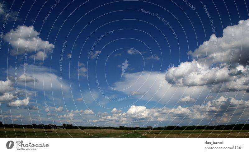 bis zum horizont und zurück Wolkenformation beruhigend Horizont Baum Feld Ferne gelb grün träumen Erholung Verlauf Sommer Ferien & Urlaub & Reisen Brandenburg