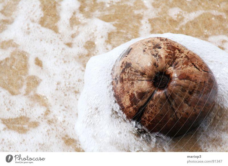 Kokosnuß im Meer Kokosnuss Asien nass feucht Thailand Indischer Ozean Strand Gischt Unbekümmertheit Außenaufnahme Badestelle Küste Frucht Wasser Sand