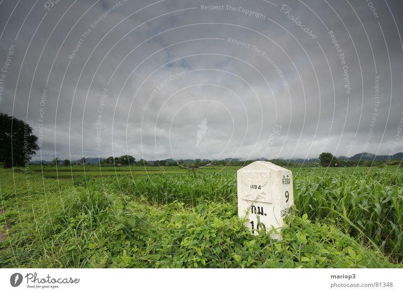 Mainland of Thailand Kilometerstein Reisfeld Monsun Wolken Feld grün Asien Landwirtschaft reich schön Außenaufnahme mehrere Grünfläche Ackerbau Erde Wetter