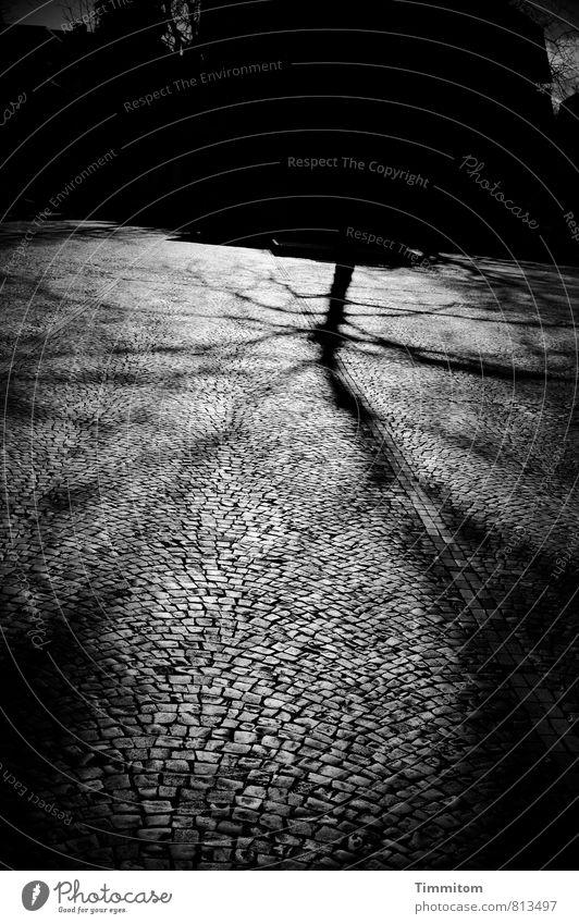 600. Oder so. Baum Heidelberg Menschenleer Pflastersteine Platz Linie Stein ästhetisch bedrohlich dunkel einfach grau schwarz Gefühle Schatten Schwarzweißfoto