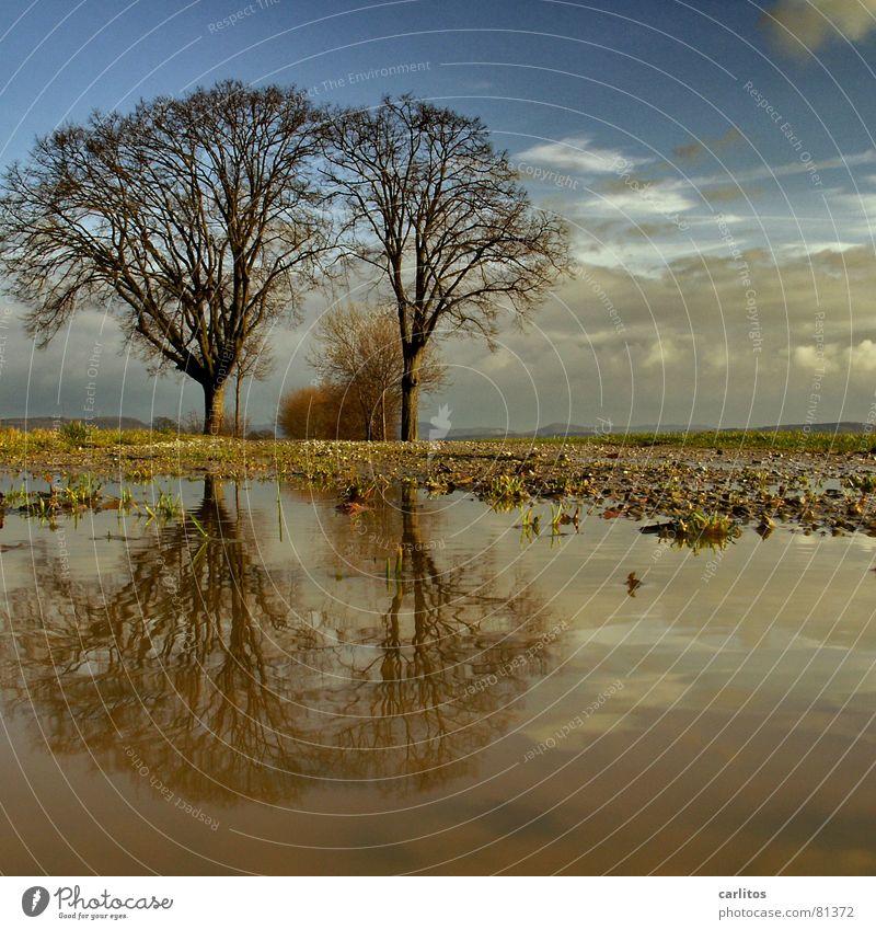 Tim und Struppi Horizont Baum 2 Fußweg Pfütze Reflexion & Spiegelung Wolken dramatisch Wind Leidenschaft Mitte Symmetrie Weißabgleich Baumstamm Baumstruktur