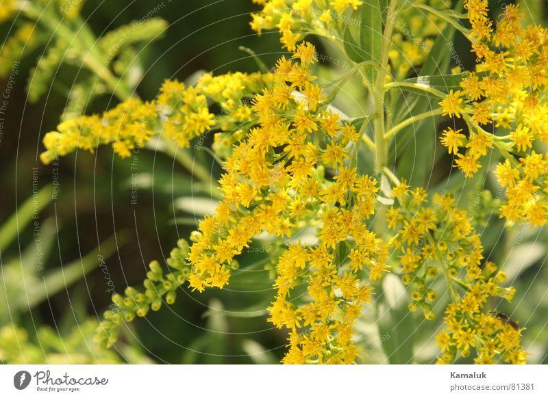 früher Frühling Tier Europa mehrfarbig schön grün Blüte Blume Pflanze Gärtner Wiese Außenaufnahme authentisch Blumenhändler Botanik Umwelt Park Wildnis