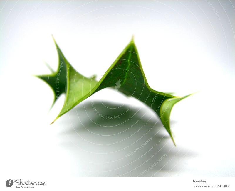 ::: Rockendessportblatt ::: Dreieck grün stachelig Unikat Licht Baum Photosynthese Umwelt Götter Muster hellgrün Zickzack Sträucher Dorn lässig Gelassenheit