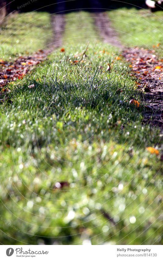 Weg Natur Pflanze grün Erholung Landschaft Bewegung Wiese Herbst Gras Wege & Pfade braun Erde Idylle laufen wandern genießen