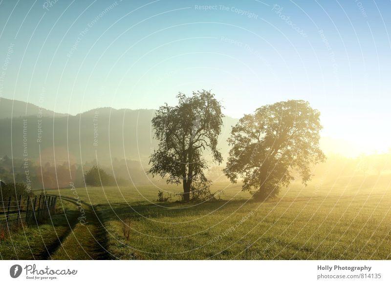 Morgennebel Umwelt Natur Landschaft Pflanze Urelemente Erde Luft Himmel Sonne Sonnenlicht Frühling Wetter Nebel Baum Gras Sträucher Wiese Feld Menschenleer